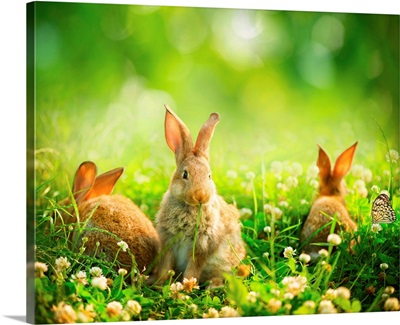 Rabbits in spring meadow