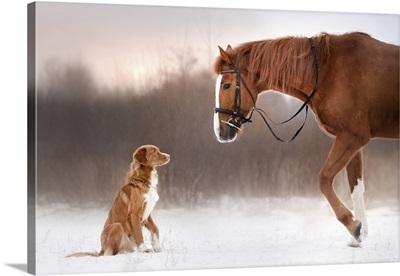 Red Horse And Dog Walking In The Field In Winter