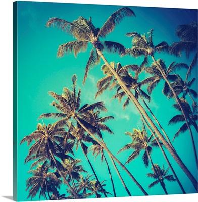 Retro Palm Trees In Hawaii