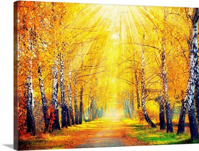 Road lined with trees in autumn foliage