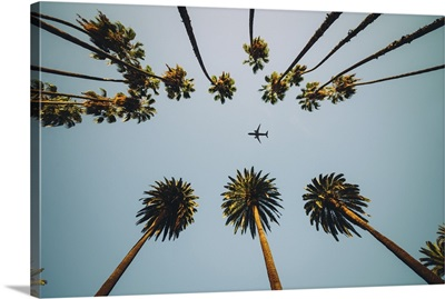 View Of Palm Trees, Sky, And Aircraft Flying