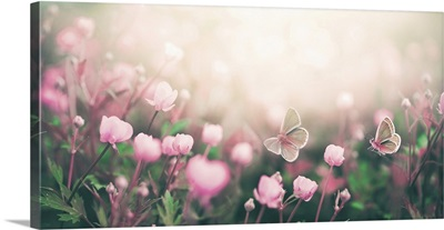 Wild Pink Flowers And Two Fluttering Butterflies Bathed In Sunlight In Nature