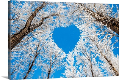 Winter landscape, branches forming a heart shape