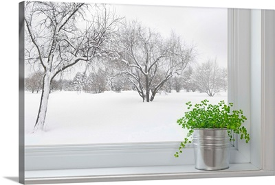 Winter Landscape Seen Through The Window With A Green Plant