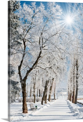 Winter landscape with snow covered row of trees