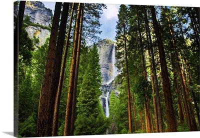 Yosemite Waterfalls Behind Sequoias In Yosemite National Park, California