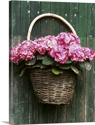 A basket of hydrangeas hanging on the wall