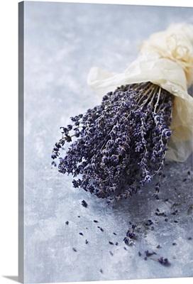 A Bouquet of Flowering Lavender