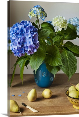 A bouquet of Hydrangeas in a blue vase with fresh pears on a wooden table