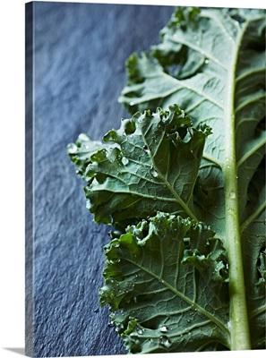 A freshly washed green kale leaf on a slate surface