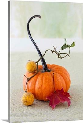 A Pumpkin Still Life