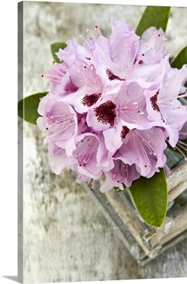 A rhododendron flower