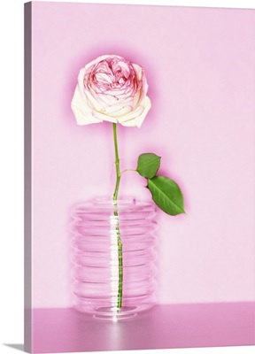 A single hybrid tea rose in a ribbed glass vase