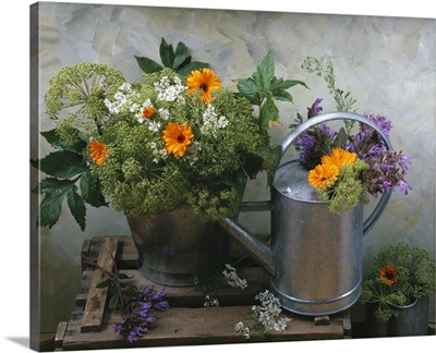 Angelica, marigolds, sage and flowering chervil