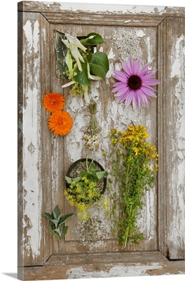 Arrangement of various fresh and dried medicinal herbs