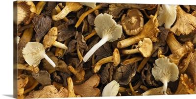 Assorted fresh mushrooms