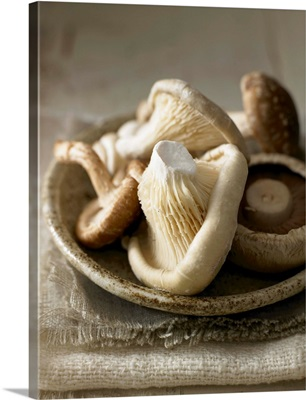 Assorted mushrooms in a dish