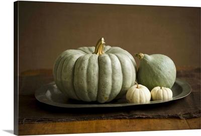 Assorted Pumpkins and Gourds on a Metal Platter