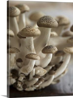 Beech mushrooms (Shimeji)