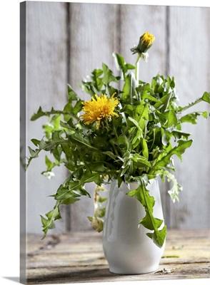 Dandelions in a white vase