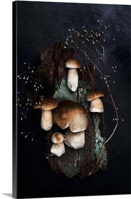Fresh porcini mushrooms and a dried stock of seeds on a piece of bark