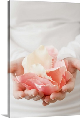 Hands holding rose petals