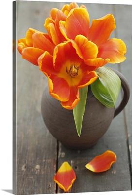 Jug of orange tulips