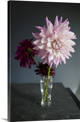Large Pink Dahlia in a Small Glass Vase with Two Smaller Dark Pink Flowers