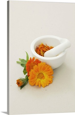 Marigolds, fresh and dried