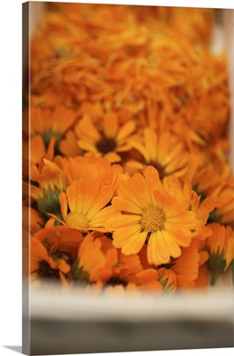 Marigolds in woodchip basket