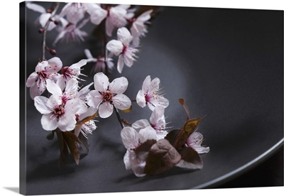 Pink apple blossoms on dark plate