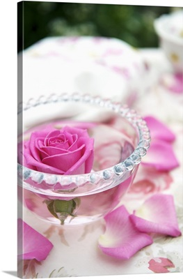 Pink rose in bowl of water on garden table
