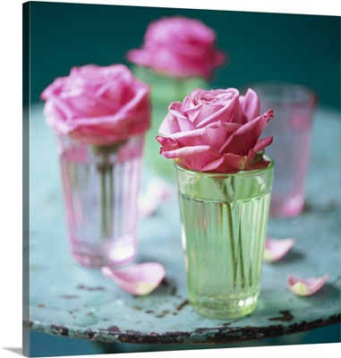 Pink roses in glasses