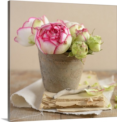 Roses in a flower pot on an old book