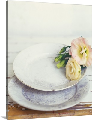 Still life with roses and old plates