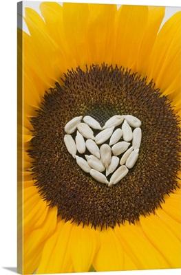 Sunflower with sunflower seed heart