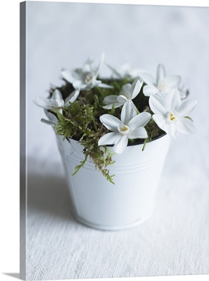 White flowers and moss in a metal pot