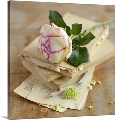 White long stem rose on old books