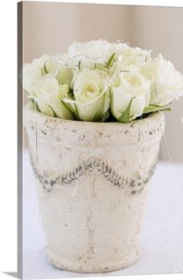 White roses in plant pot