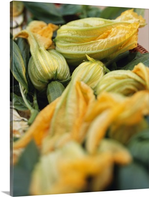Zucchini flowers, open and closed