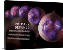3D illustration of hematopoiesis of white blood cells