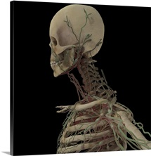 3D rendering of human skull with lymphatic system
