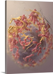 3D structure of melanoma cell