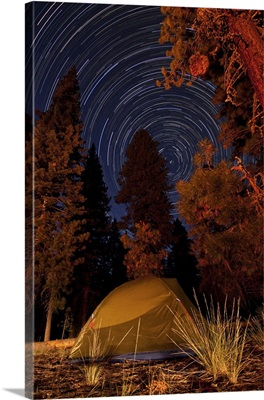 A tent and pine trees against a backdrop of star trails
