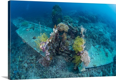 Airplane wreck sitting atop reef, overgrown with soft coral and crinoids