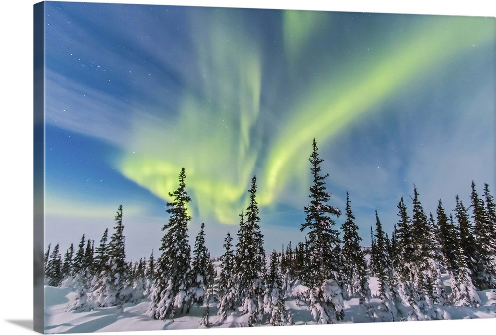Aurora borealis over the trees in Churchill, Manitoba, Canada