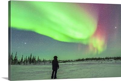 Aurora borealis with Vega and Arcturus stars over Churchill, Manitoba, Canada