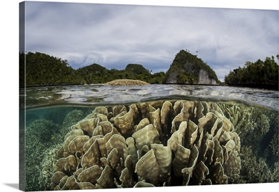 Beautiful Coral Reef Thrives Around An Island In A Remote Part Of Raja Ampat, Indonesia