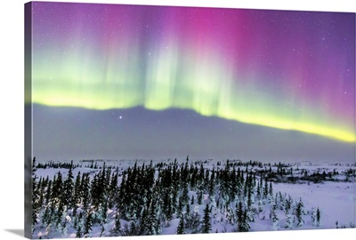 Pink aurora over boreal forest in Canada