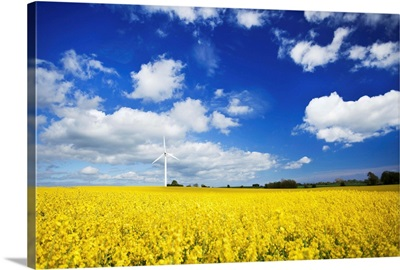 Wind turbine in a canola field against cloudy sky, Denmark